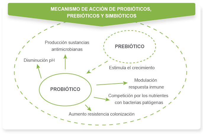Alimentos funcionales iii prebi ticos probi ticos y simbi ticos farmacia sof a castro - Alimentos con probioticos y prebioticos ...